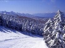 樹氷の林間コース