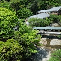 【絶景の宿】夏の新緑◆夏は一面、鮮やかな緑を魅せてくれます。カニなどの自然の生き物も訪れる季節です。