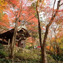 【月光園から徒歩20分】瑞宝寺(ずいほうじ)公園◆人気紅葉スポット。シーズン中は屋台で賑わいます。