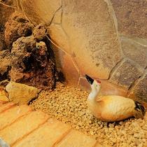 殿方大浴場「鶴の湯」◆ちいさな鶴さんがつぶらな瞳で見守っています。