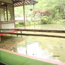 池の上のお部屋