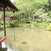 池の上のお部屋からの景色