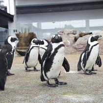京都水族館ペンギン