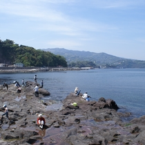 ■真鶴半島■  琴ヶ浜