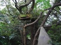 美多羅志神社の竜