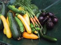 収穫された新鮮野菜