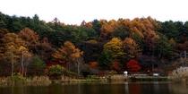 蓼科湖・秋(1)