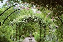 バラの咲きこぼれる英国庭園