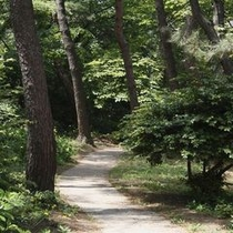 【遊歩道】/四季折々の表情を見せる自然を直に感じることができます