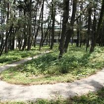 【遊歩道】/広大な松林には、お散歩を楽しんでいただける遊歩道がございます