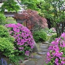 春は庭園のつつじがきれいです