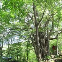 桂の木(端神地区)