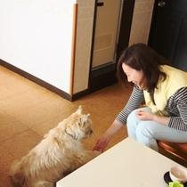 客室-和洋室2☆2~6名でご利用になれます