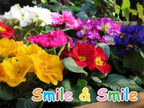 """京都一"" 全館禁煙(Smile&Smile)"