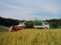 自家農場の米の収穫