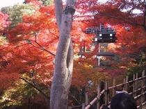 名所旧跡-東福寺1