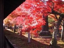 名所旧跡-東福寺2