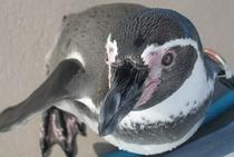 間近にペンギンが…南知多ビーチランドまでは車で約10分