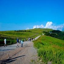 【美ヶ原②】牧歌的な草原と急峻な地形が広がる風景を望みながら、遊歩道や本格的なトレッキングコースが楽