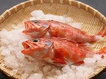 IMG_赤魚 2
