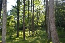 敷地内のカラマツ林