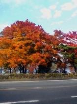 山中湖の紅葉①