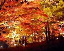 山中湖の紅葉②