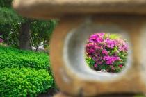 5月には沢山の躑躅の花をご覧頂けます。
