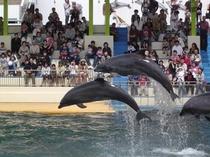 松島水族館のイルカショー♪