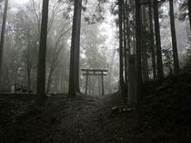 熊野古道(発心門王子付近)