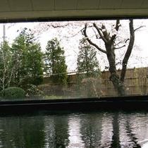 *温泉 春には、窓辺に桜を眺めながらご入浴をお楽しみいただけます。