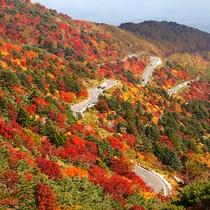 *【秋の吾妻スカイライン】各スポットで色づく時期違うので、シーズンを通して紅葉を楽しめます♪