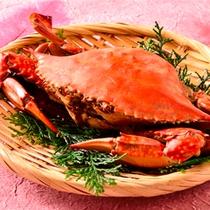 三河湾産「渡り蟹」
