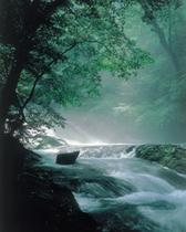 菊池渓谷(新緑)