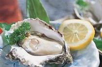 山陰の天然の岩牡蠣