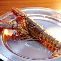 ■オマール海老を使った鮮魚料理
