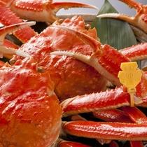 タグ付き越前蟹