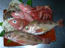 こだわり高級魚