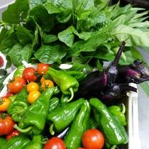 2016年7月初旬に収穫した、夏野菜の一例。 オクラやモロヘイヤはもうちょうっと後で