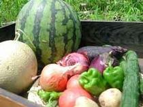 無農薬・有機自家栽培野菜