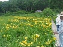 カヤの平高原の北ドブ湿原