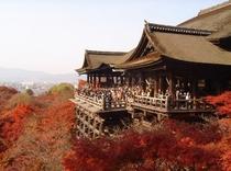 紅葉の清水寺