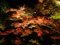 紅葉の高台寺