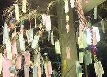 七夕の笹の葉