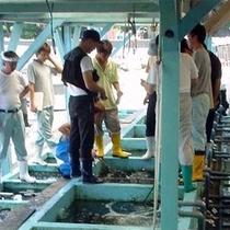 漁協市場競り風景