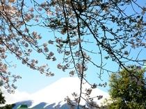 庭園風景(春)