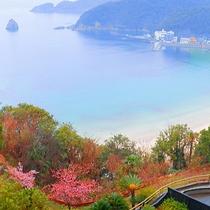 ■当ホテル敷地内の河津桜と外浦海岸