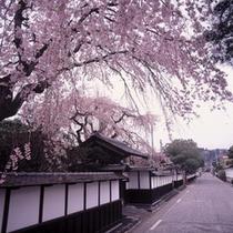 【周辺観光】登米市登米町の明治村の桜