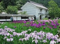 加茂菖蒲園