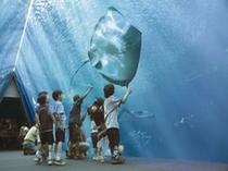 環境水族館アクアマリンふくしま